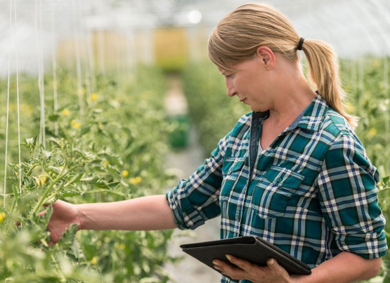 Woman tending greenhouse plants